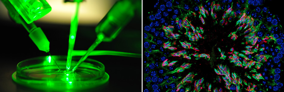 Find A PhD : Fully-funded PhD positions in Biomedical