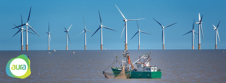 Offshore Wind Energy and the Environment