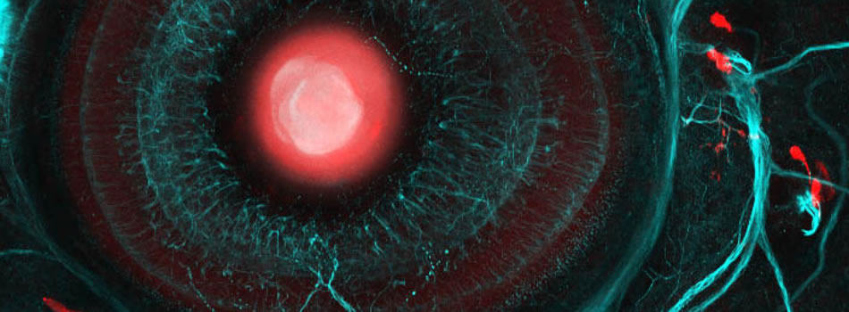 Wellcome Trust 4-year Programme in Optical Biology at UCL